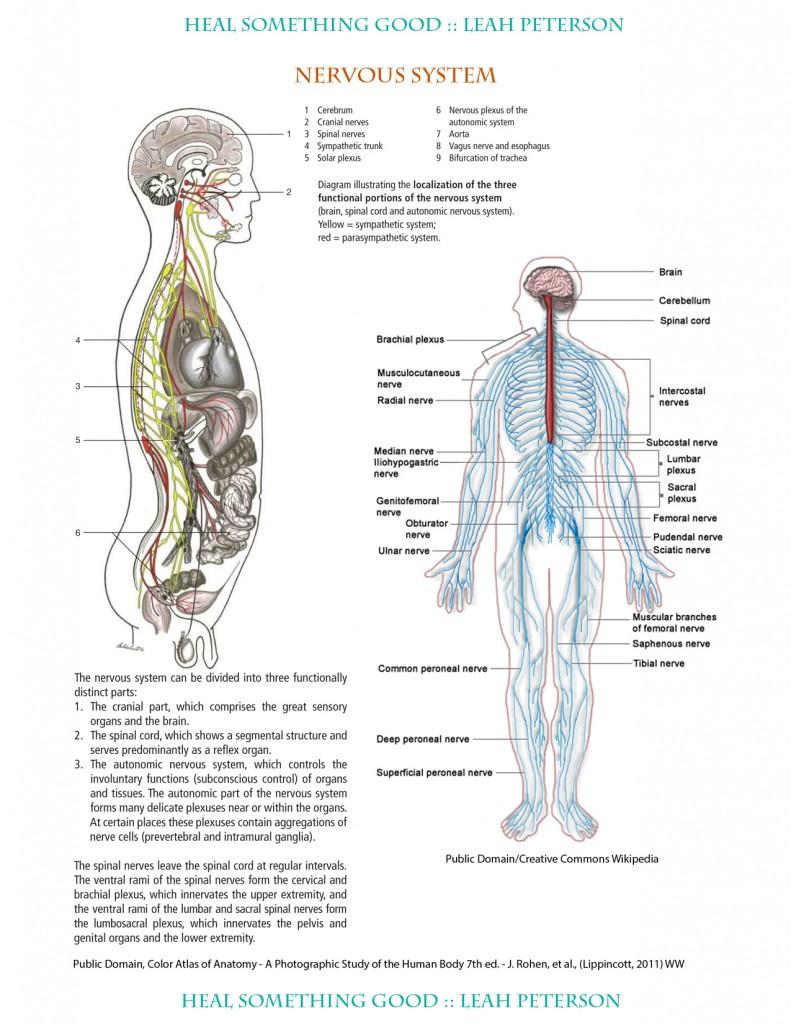 Beste Bauchspeicheldrüsenkrebs Anatomie Bilder - Anatomie Ideen ...
