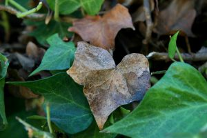 leavesheart